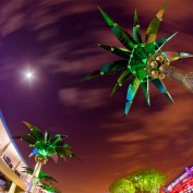 Tomorrowland Palm Trees - Walt Disney World