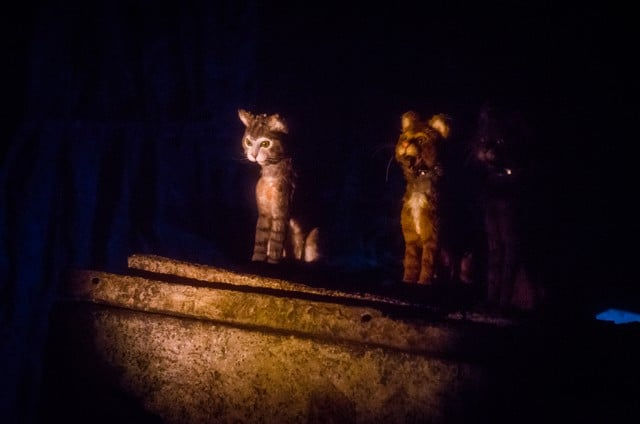 haunted-mansion-cats