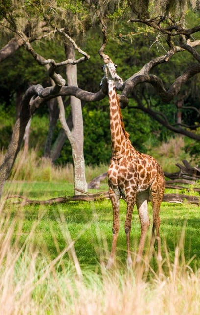 animal-kingdom-disney-139