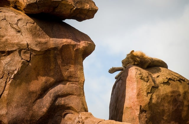 animal-kingdom-disney-145