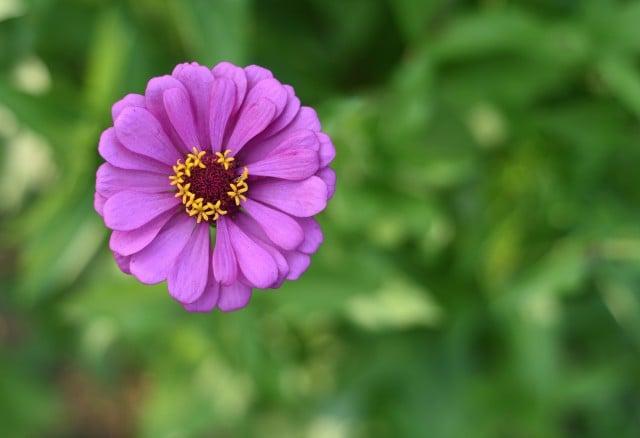nikon-d810-flower-overhead