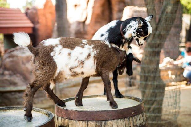 goat-galaxy-disneyland-kronk-497